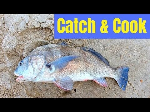 Big Black Drum Catch & Cook (Terrible Conditions For Surf Fishing)