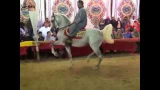 رقص خيول عربية حفلة الصباح ٢٠١٤الجزءالثالث
