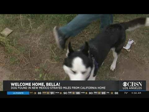 Pet Central - Missing dog found FOUR YEARS LATER, 400 miles from home