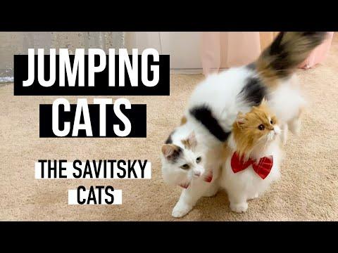 Jumping cats || Cat Tricks ||Funny Cat Videos || The Savitsky Cats