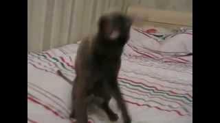 Мистер Патрик Корниш рекс прикол с котом ржака смешное видео Анекдот, приколы хахах