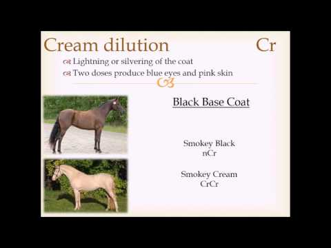 Horse Coat Color Genetics