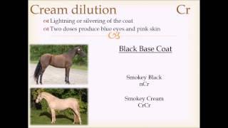 Horse Coat Color Genetics