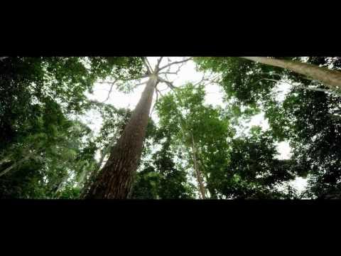 Однажды в лесу мультфильм cмотреть онлайн в хорошем