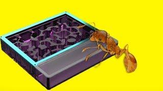 Ameisenfarm aus dem 3D Drucker für meine Killerameisen