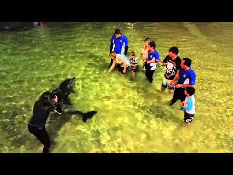 Wild dolphin Feeding at Tangalooma Island Resort - APSE TOURS