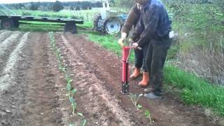 "Transplanting Broccoli with the ""Hatfield Transplanter"""