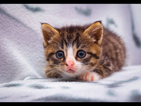 Small Cute Kitten Nikita - YouTube