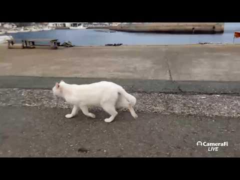 感動猫動画's broadcast 猫島よりLIVE
