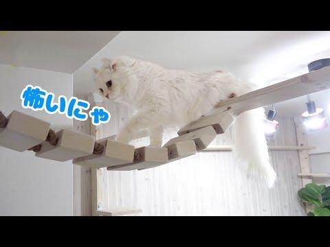 マロンが初めて吊り橋を使ってくれました。