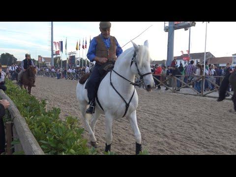 XL FEIRA NACIONAL DO CAVALO GOLEGÃ PORTUGAL 2015 - NATIONAL HORSE FAIR FEIRA SÃO MARTINHO