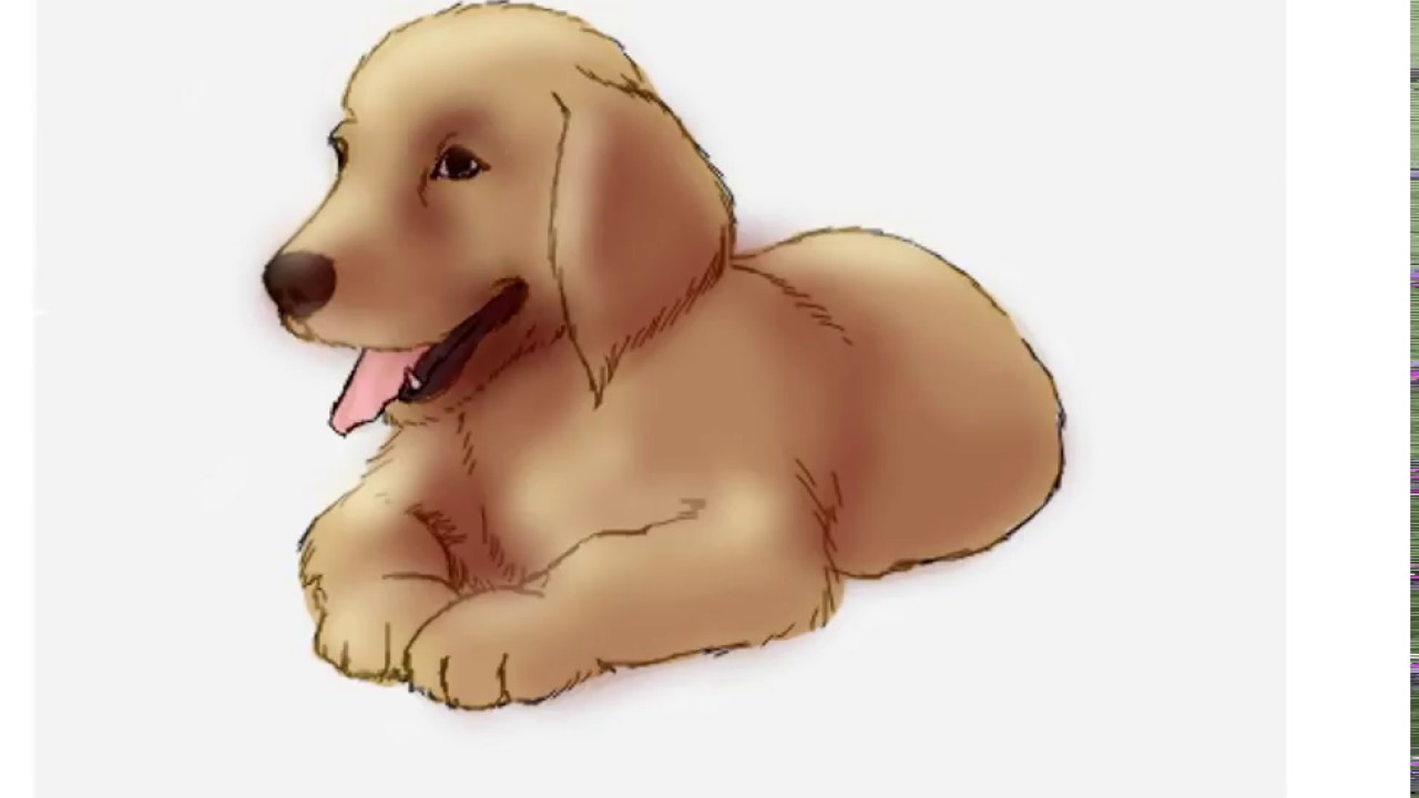 how to draw a golden retriever puppy in easy step by step drawing