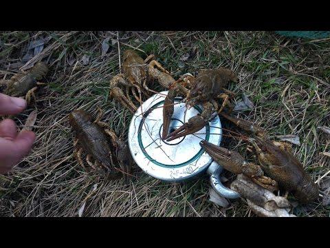 запрет на ловлю раков в калужской области