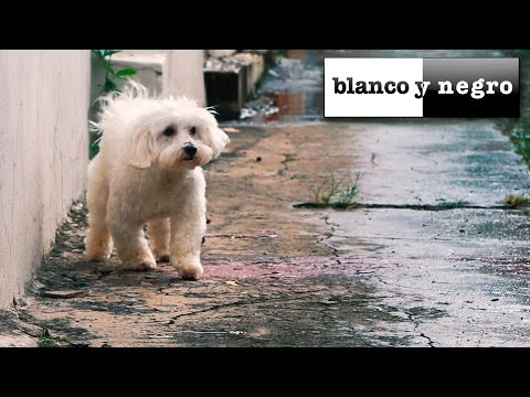 Axwell & Shapov - Belong (Axwell & Years Remode Edit) Official Video