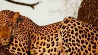 Animaux d'Afrique!