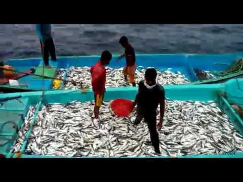 Deep Sea Fishing in bay of bengal sea (india) | Net Fishing - Fishermen of India catch fish in sea