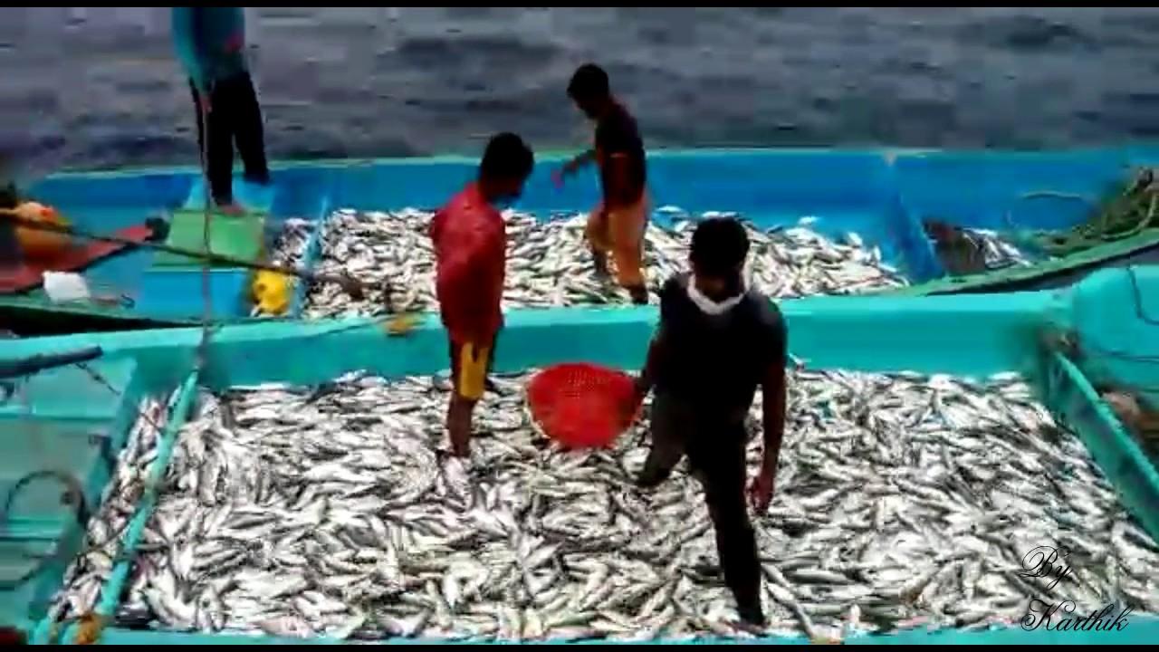 Deep sea fishing in bay of bengal sea india net for Deep sea fishing seattle