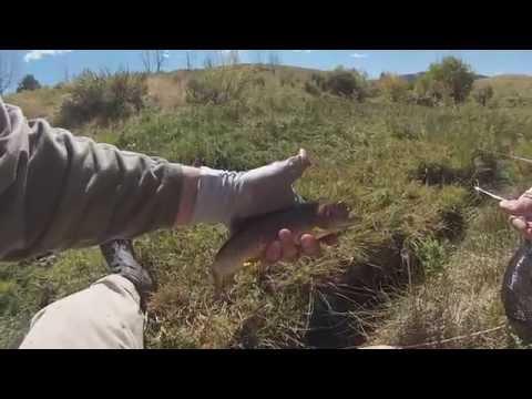 Yellowstone Cutthroats in Utah