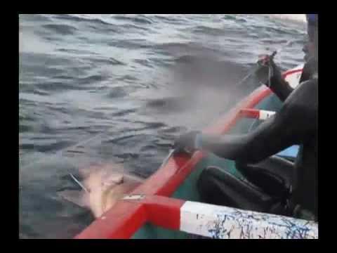 Senegal diving