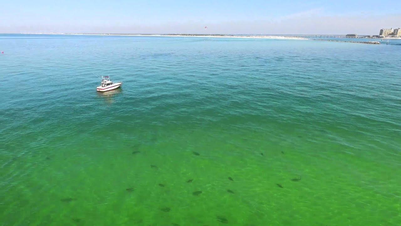 Shark gathering outside destin pass florida youtube for Destin shark fishing