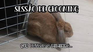 Grooming ao Duque