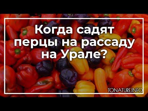 Когда садят перцы на рассаду на Урале? | toNature.Info | черенковани | садоводство | размножение | выращивание | огородные | комнатные | растения | растений | культуры | tonatureinfo