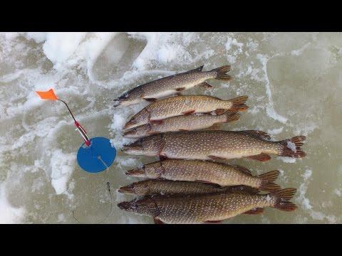 рыбалка на жерлицы март апрель