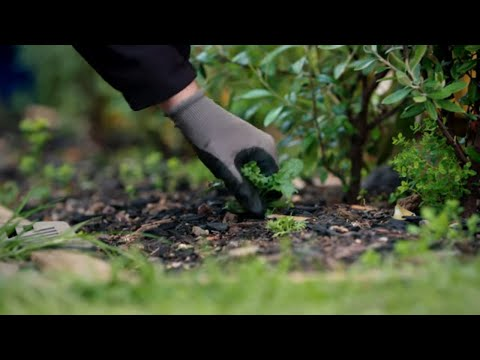 How to Manage Weeds   Mitre 10 Easy As Garden