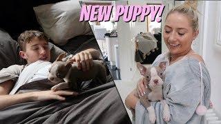 we got a new dog