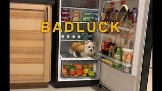 Bad Luck - Lipta ft. The TOYS | BOWKYLION