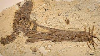 10 Unglaubliche fossile Entdeckungen!
