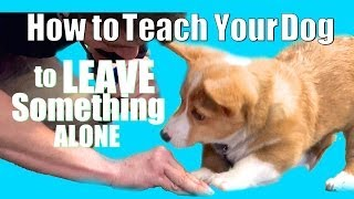 How To Teach Any Dog To Leave Something Alone