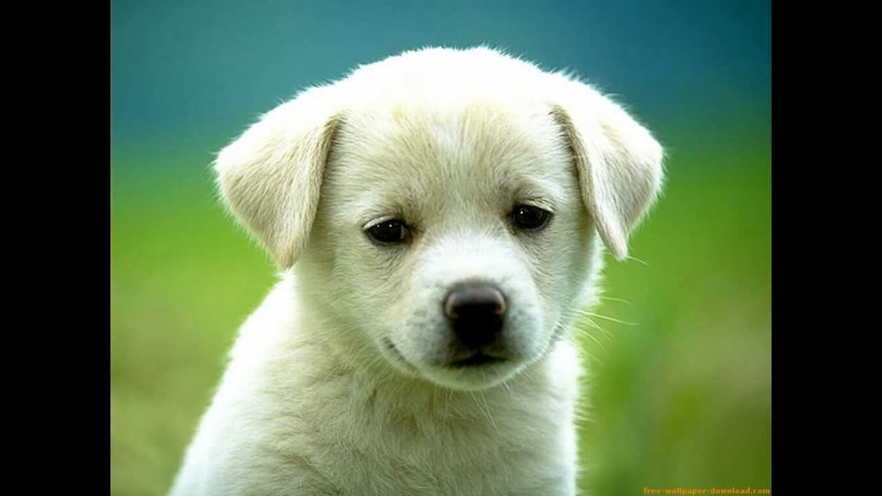 fotos de perritos - photo #39