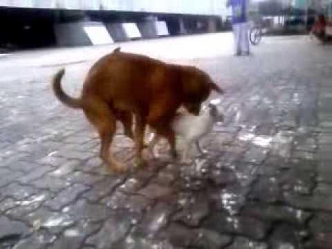 anjing gila sexs