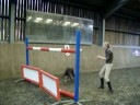 Jumping Dog JUST UNDER 6FT!!  MUST SEE!!!