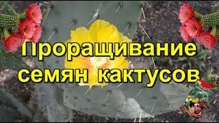 Кактусы из семян|  Посадка кактусов семенами
