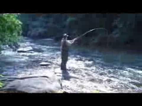 North Georgia Fly Fishing & Cabin Rental