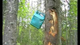 """Медведь на """"приваде"""".....Hunting in Russia"""