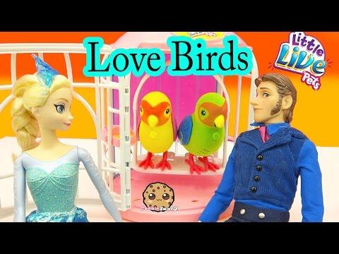 Little Live Pets LOVE Birds Talking Singing Interactive Toys with Frozen Queen Elsa - Cookieswirlc