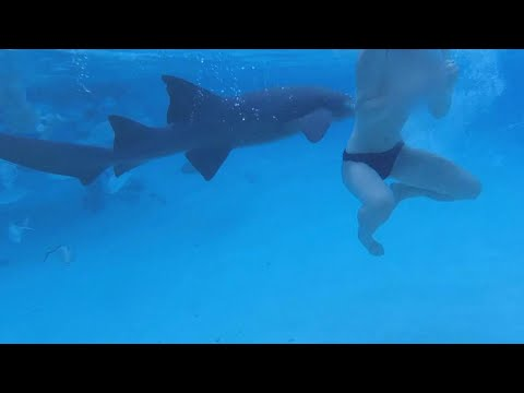 Bride on Honeymoon Gets Attacked By Shark: 'I Felt Something Clamp Down'
