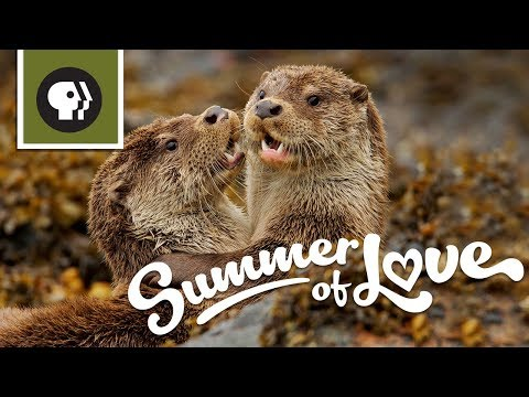 NATURE's Summer of Love