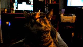 Реакция кошки на звуки пуков