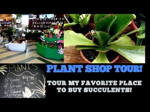 PLANT SHOP TOUR! WHITE BEAR FLORAL SHOP!