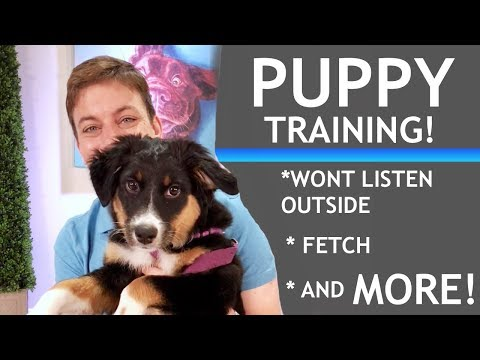 If Your Puppy Wont Pay Attention, Heres What To Do!