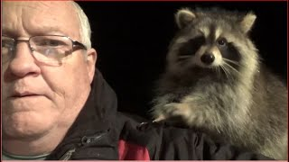 Raccoon Whisperer Story   CBC Television Halifax, NS