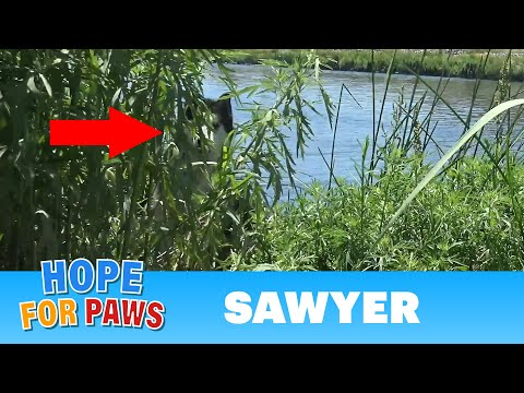 Husky got spooked by fireworks and ended up in the river!  He cried like a baby when...