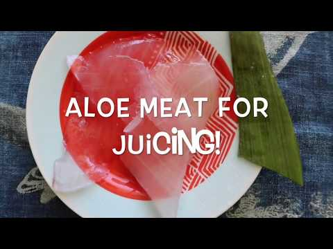 How To Cut The Aloe Vera Leaf and Eat It Raw | Benefits of Aloe Vera!