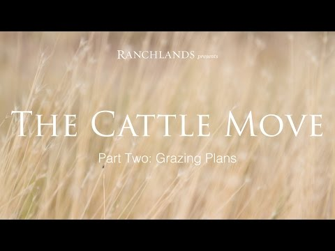The Art of the Cattle Move II: The Planning