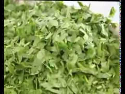 parsley cutting machine