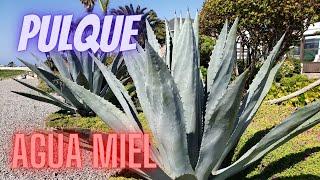 Agua Miel, Pulque y Nieve En Popotla | Baja California